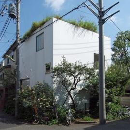 house plum_3