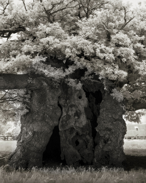 Portraits of time - Beth Moon 5