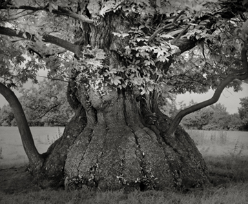 Portraits of time - Beth Moon 4