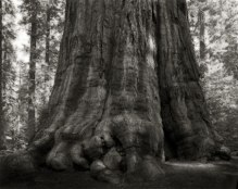 Portraits of time - Beth Moon 16