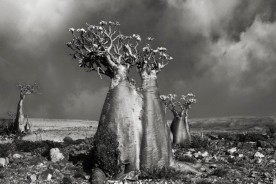 Portraits of time - Beth Moon 00
