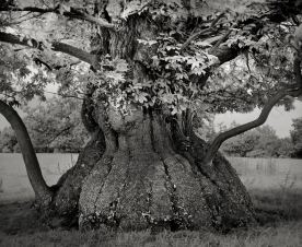 Portraits of time - Beth Moon 0000