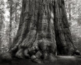 Portraits of time - Beth Moon 000