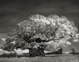 Portraits of time - Beth Moon 3