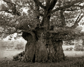 Portraits of time - Beth Moon 2