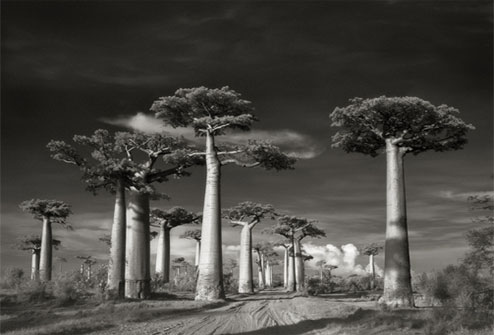 Portraits of time - Beth Moon 14