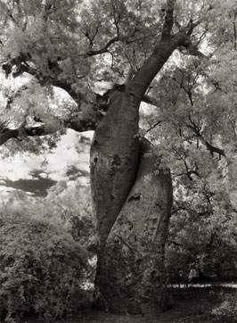 Portraits of time - Beth Moon 13