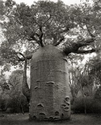 Portraits of time - Beth Moon 21
