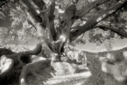 Portraits of time - Beth Moon 10