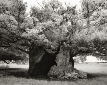 Portraits of time - Beth Moon 9