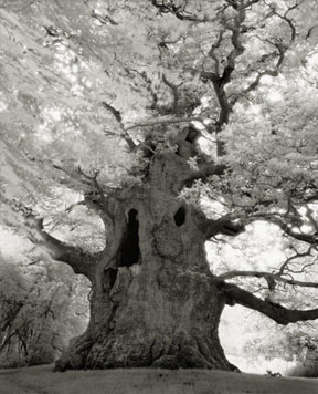 Portraits of time - Beth Moon 8