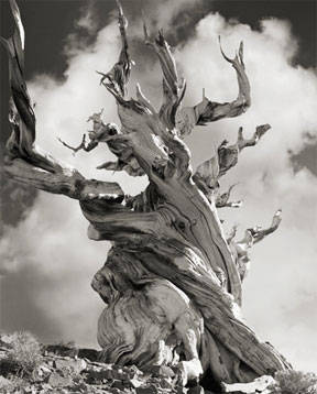 Portraits of time - Beth Moon 7