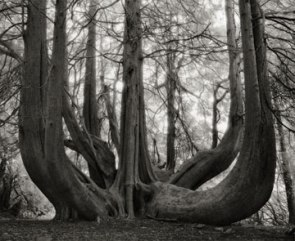 Portraits of time - Beth Moon 15