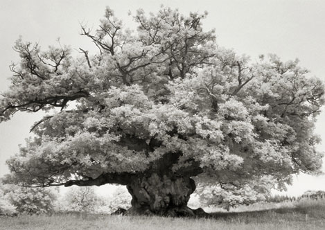 Portraits of time - Beth Moon 6