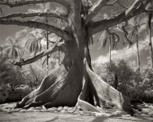 Portraits of time - Beth Moon 17
