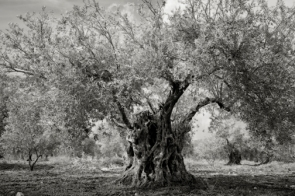 Portraits of time - Beth Moon 1
